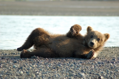 Image result for bear cubs
