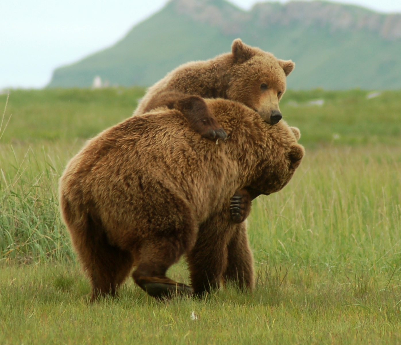 bears - photo #8