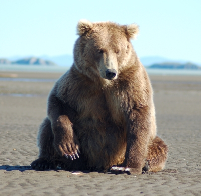 grizzlies being funny grizzly bear blog
